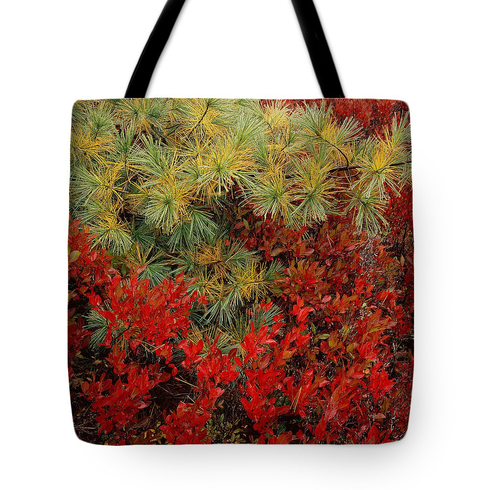 Maine Tote Bag featuring the photograph Fall Blueberries And Pine-sq by Tom Daniel