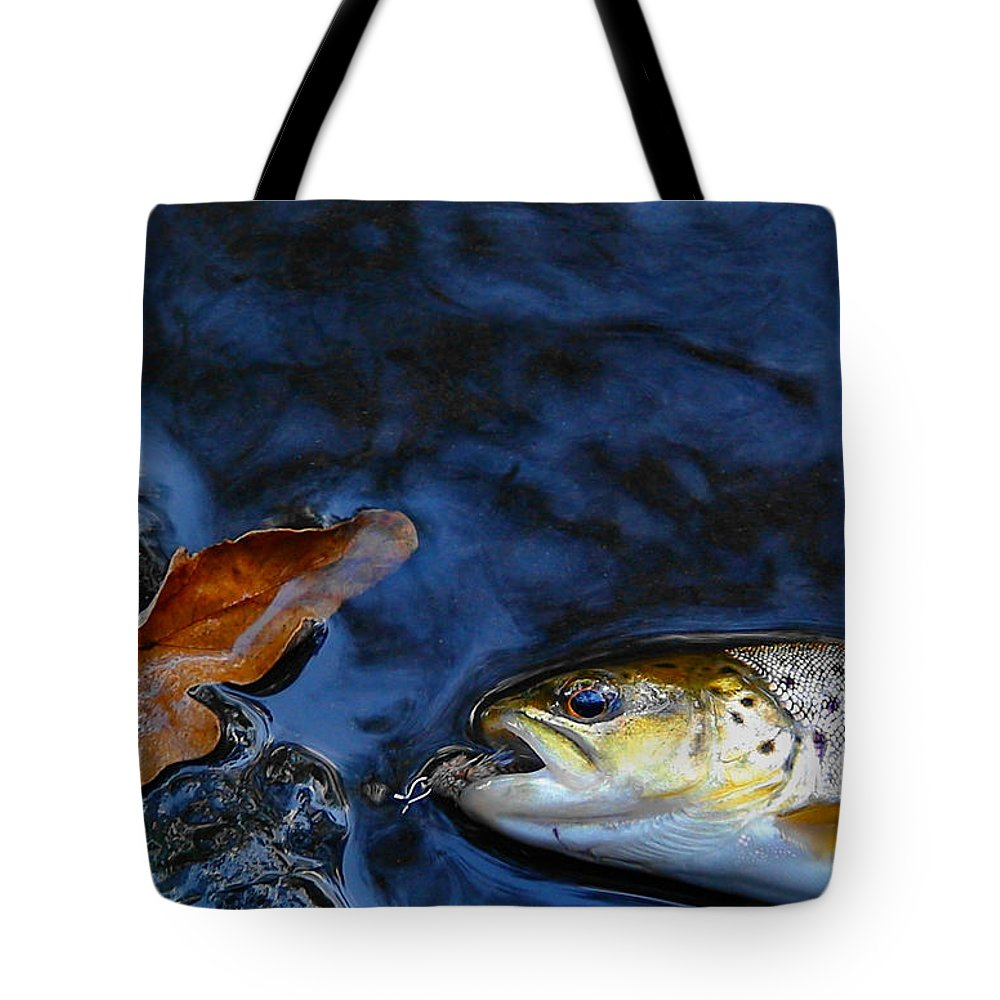 Trout Tote Bag featuring the photograph Fall Brown Trout by Thomas Young