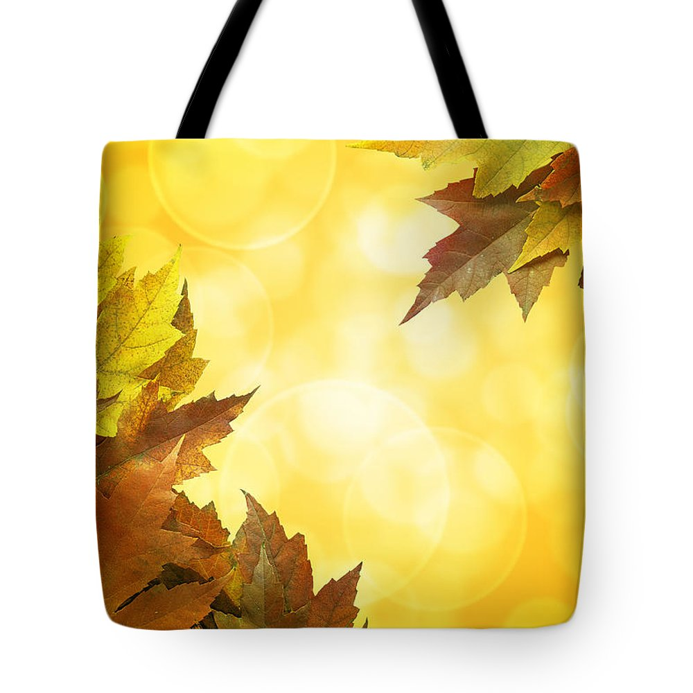 Fall Tote Bag featuring the photograph Fall Color Maple Leaves Background Border by Jit Lim