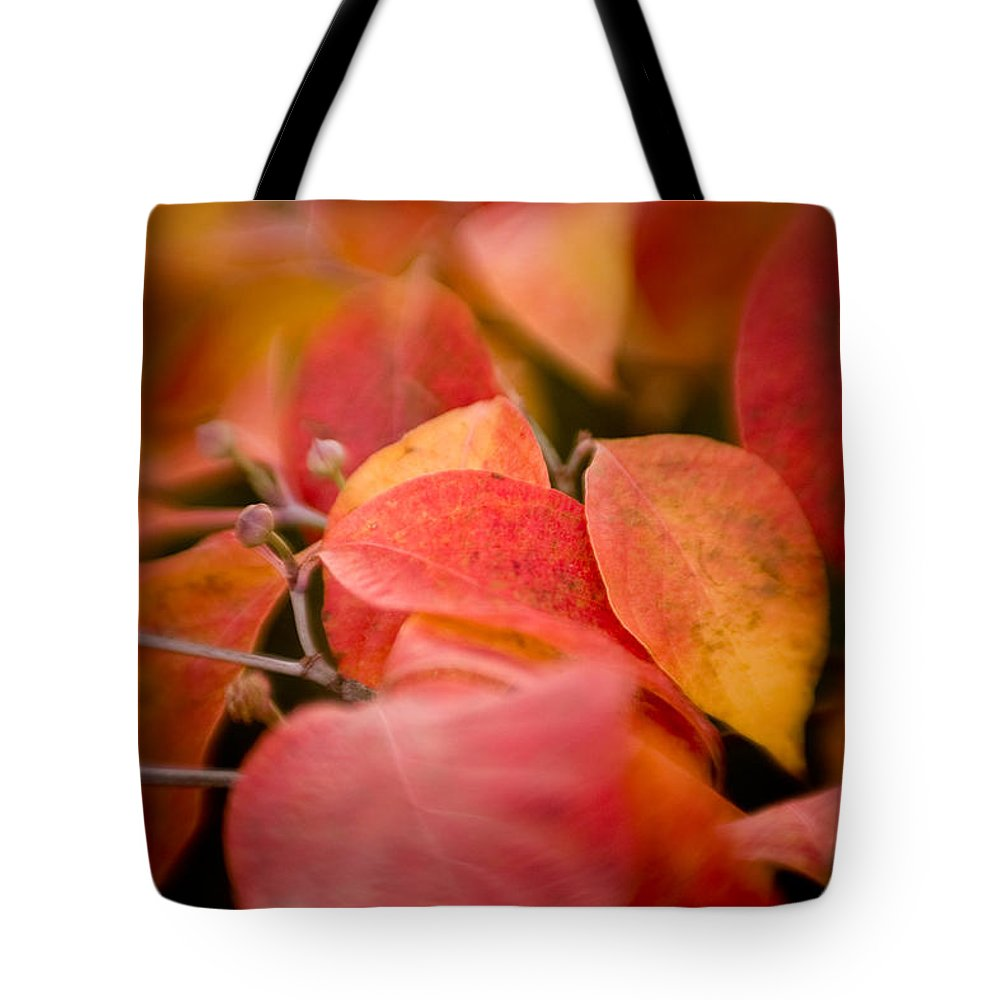 Color Tote Bag featuring the photograph Fall Colors 6675 by Timothy Bischoff