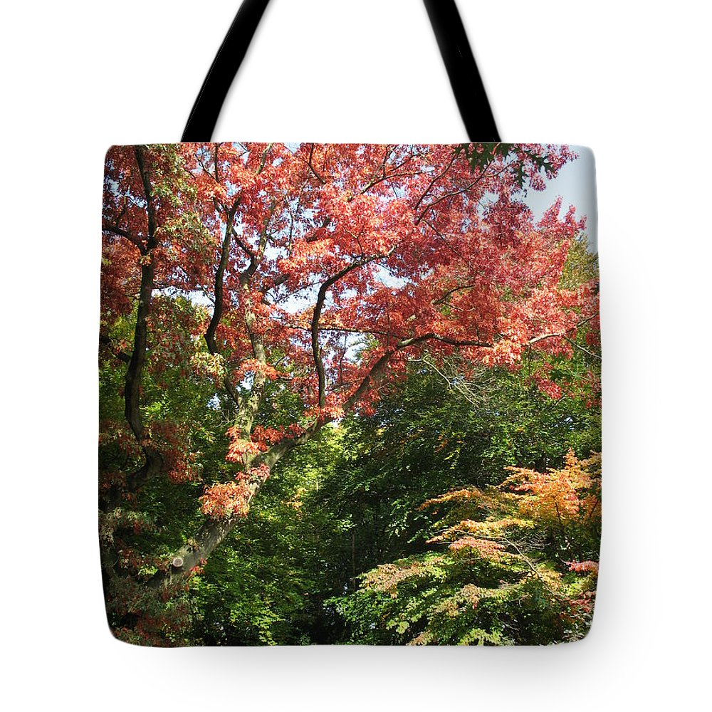 Autumn Tote Bag featuring the photograph Fall Colors by Christiane Schulze Art And Photography