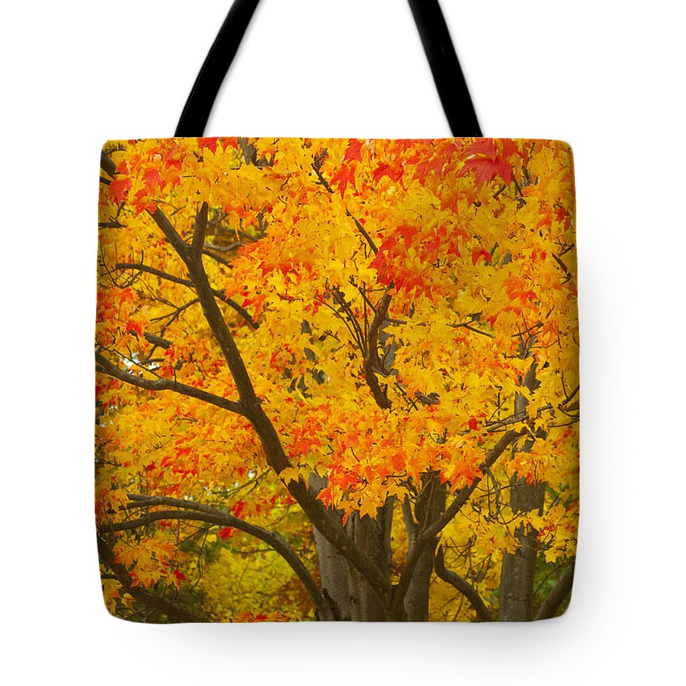 Fall Colors Tote Bag featuring the photograph Fall In Pennsylvania by Paul W Faust - Impressions of Light