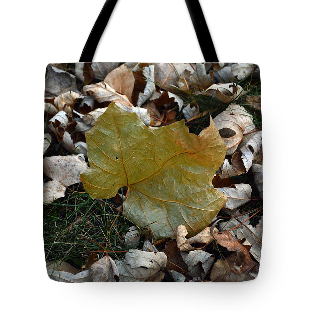 Leaf Tote Bag featuring the photograph Fall Leaf by Alice Markham