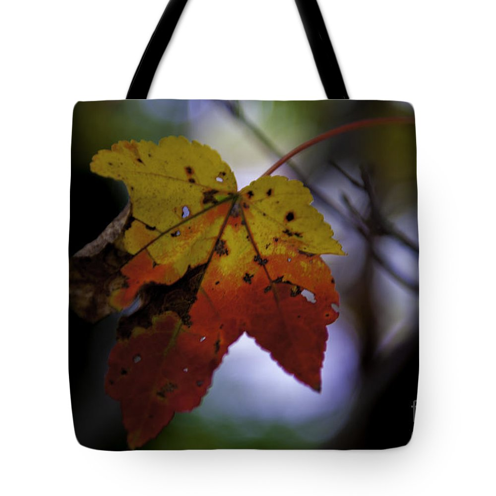 Maple Leaf Tote Bag featuring the photograph Red And Yellow Maple Leaf by Dale Powell