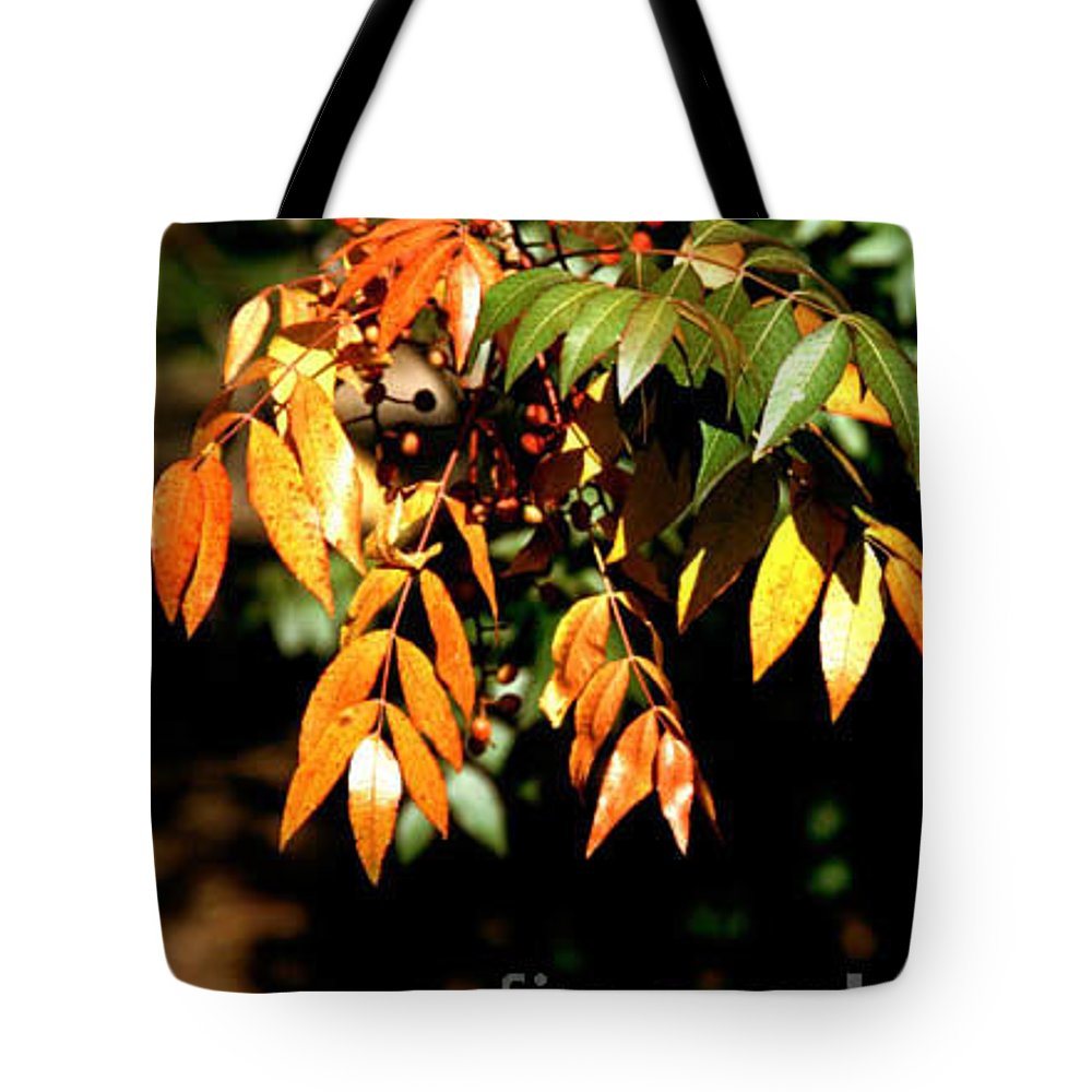 Fall Color Tote Bag featuring the photograph Fall Leaves by Kathy McClure