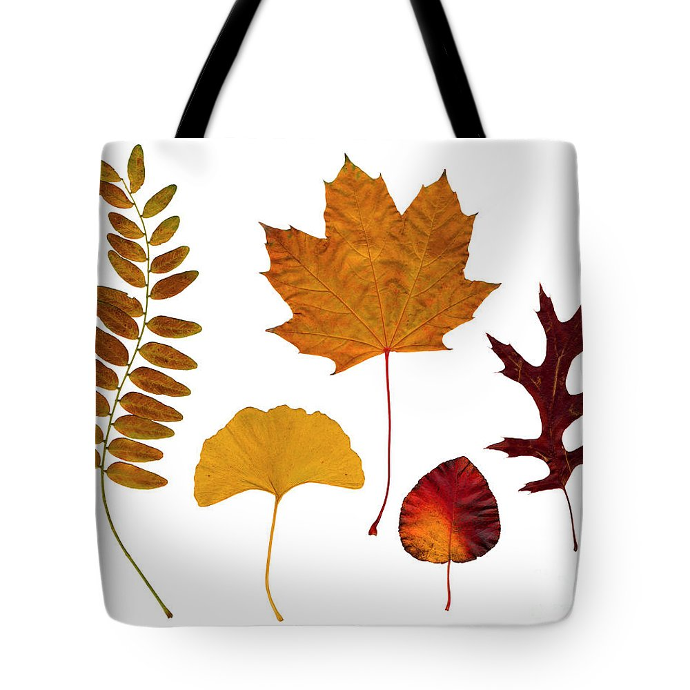 Leaf Tote Bag featuring the photograph Fall Leaves by Tony Cordoza