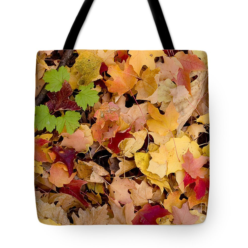 Arboretum Tote Bag featuring the photograph Fall Maples by Steven Ralser