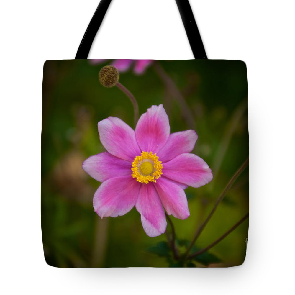Daisy Tote Bag featuring the photograph Fall Pink Daisy by William Norton