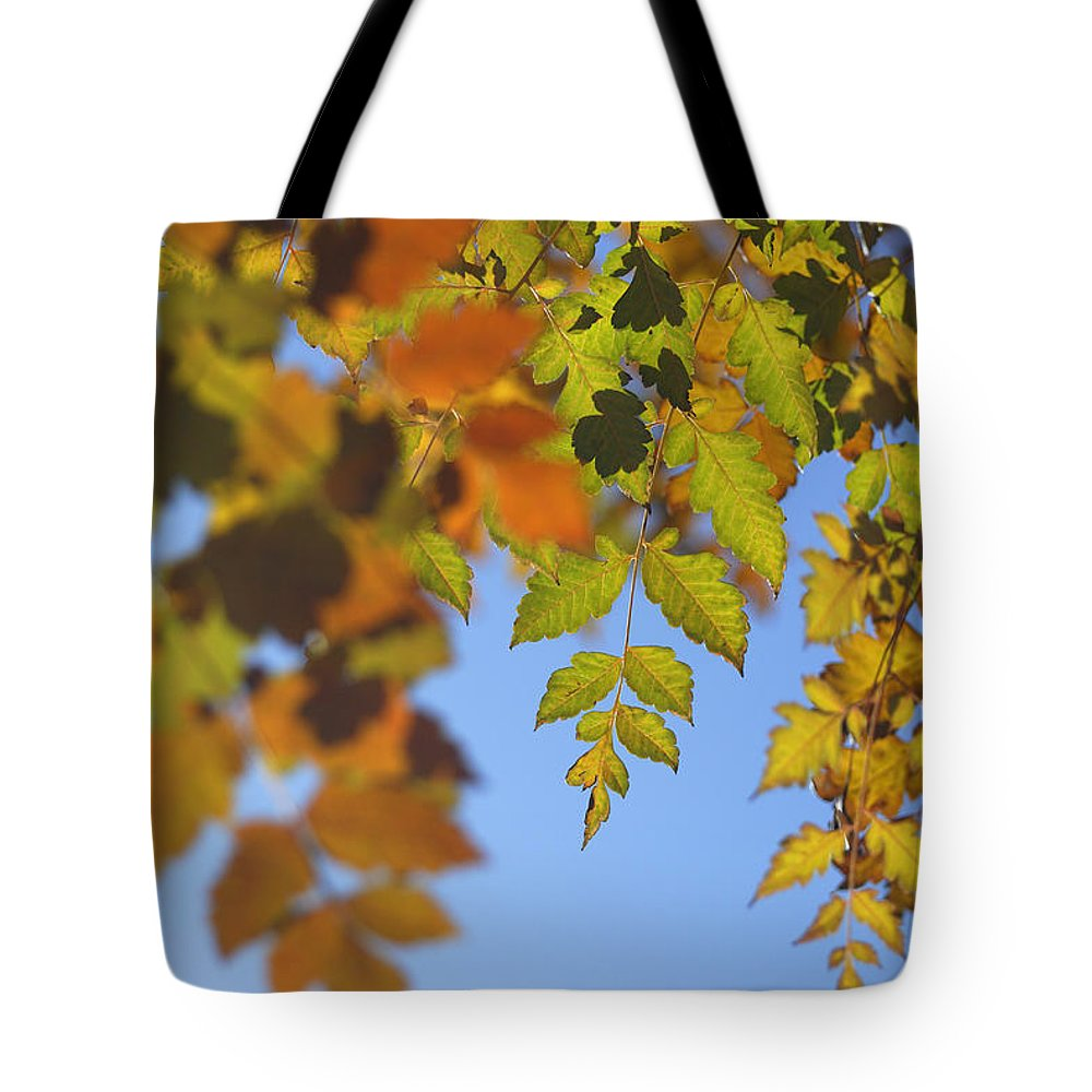Tree Tote Bag featuring the photograph Fall Time by Guido Montanes Castillo