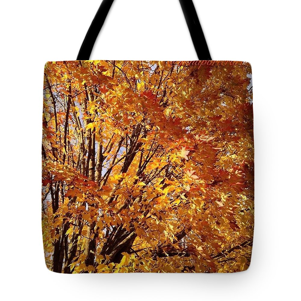 Fall Trees 2 Tote Bag featuring the photograph Fall Trees II by Anna Porter