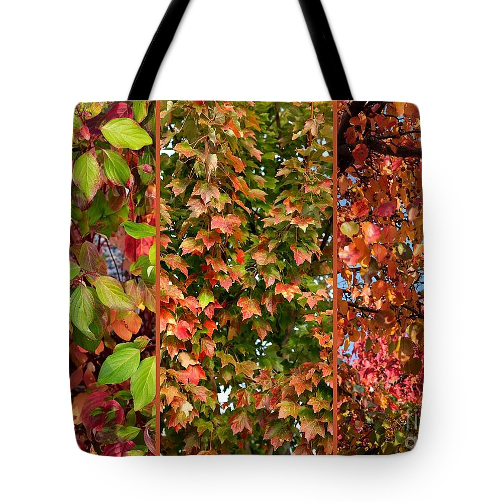 Fall Colors Tote Bag featuring the photograph Fall Trio Collage by Carol Groenen