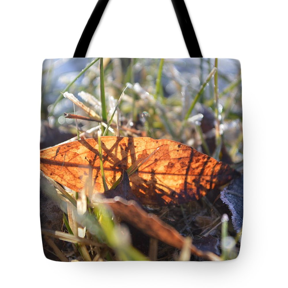 Falling Tote Bag featuring the photograph Falling For The Light by Brian Boyle