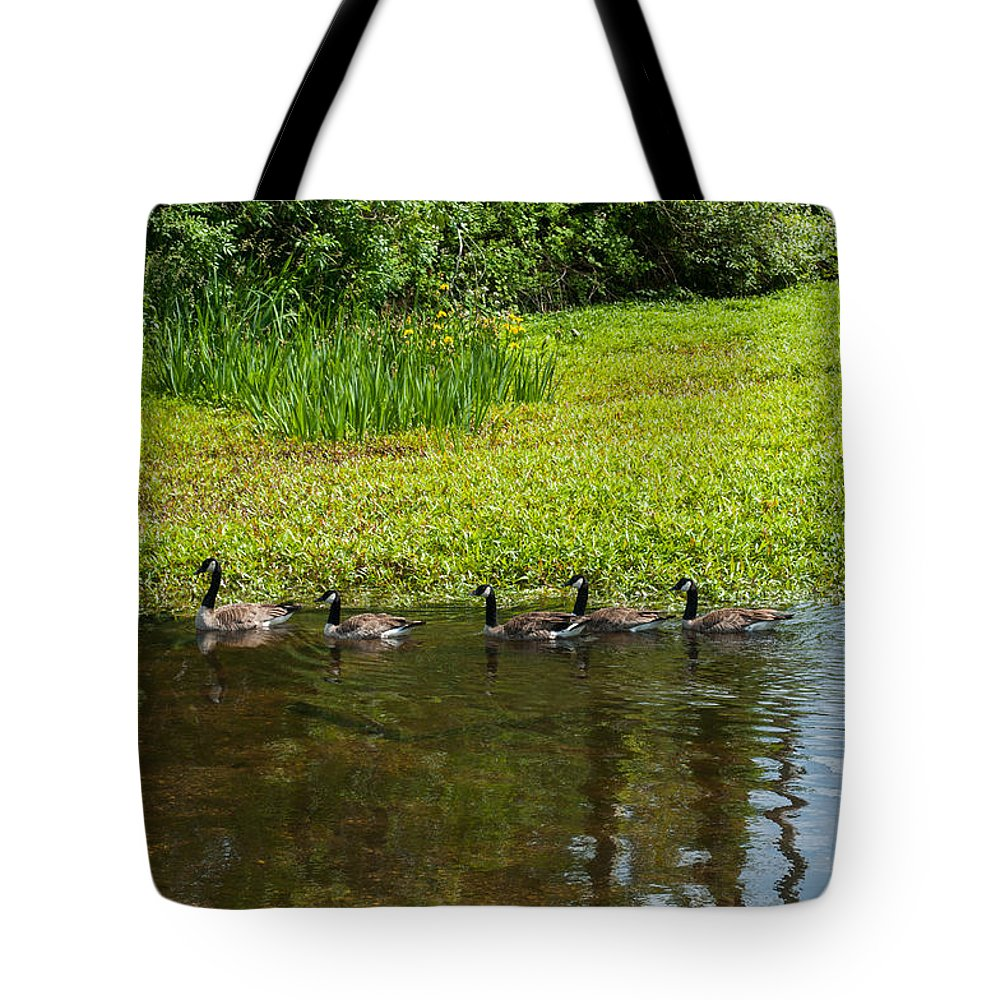 Goose Tote Bag featuring the photograph Family Swim by Tikvah's Hope