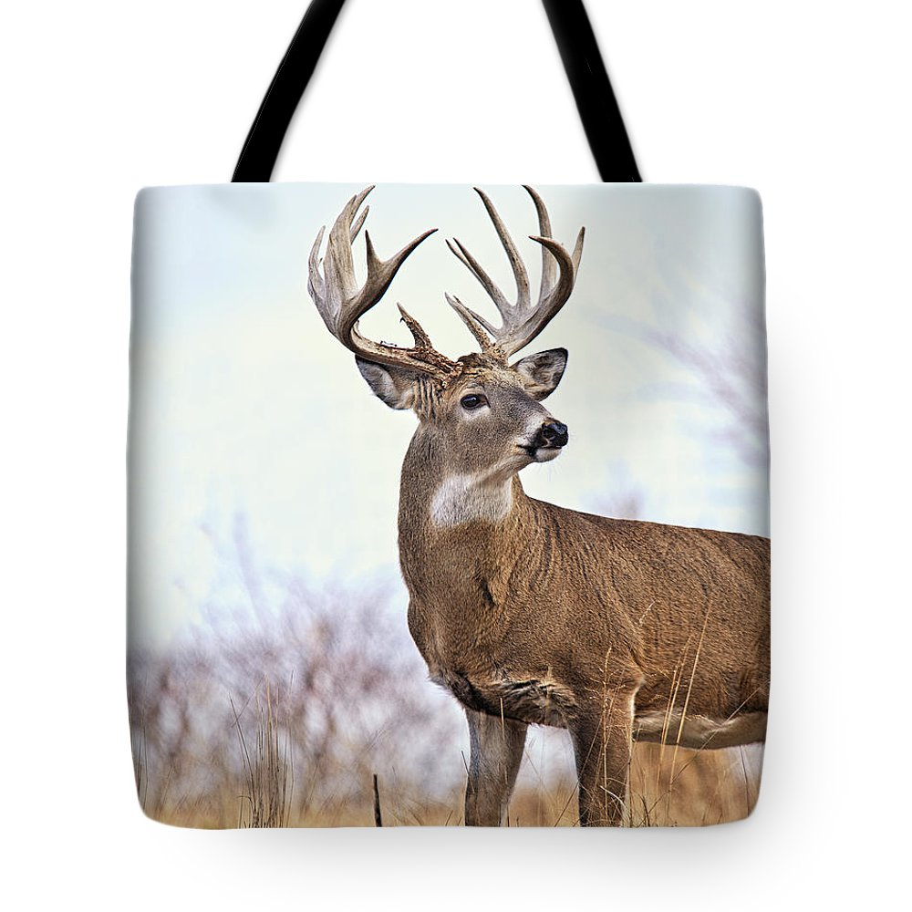 Buck Tote Bag featuring the photograph Farmland White-tailed Deer Buck by Timothy Flanigan