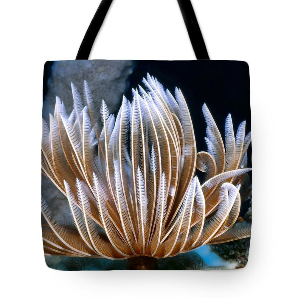 Micronesia Tote Bag featuring the photograph Feather Duster Worms 2 by Dawn Eshelman