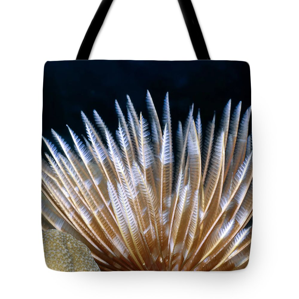 Micronesia Tote Bag featuring the photograph Feather Duster Worms 4 by Dawn Eshelman