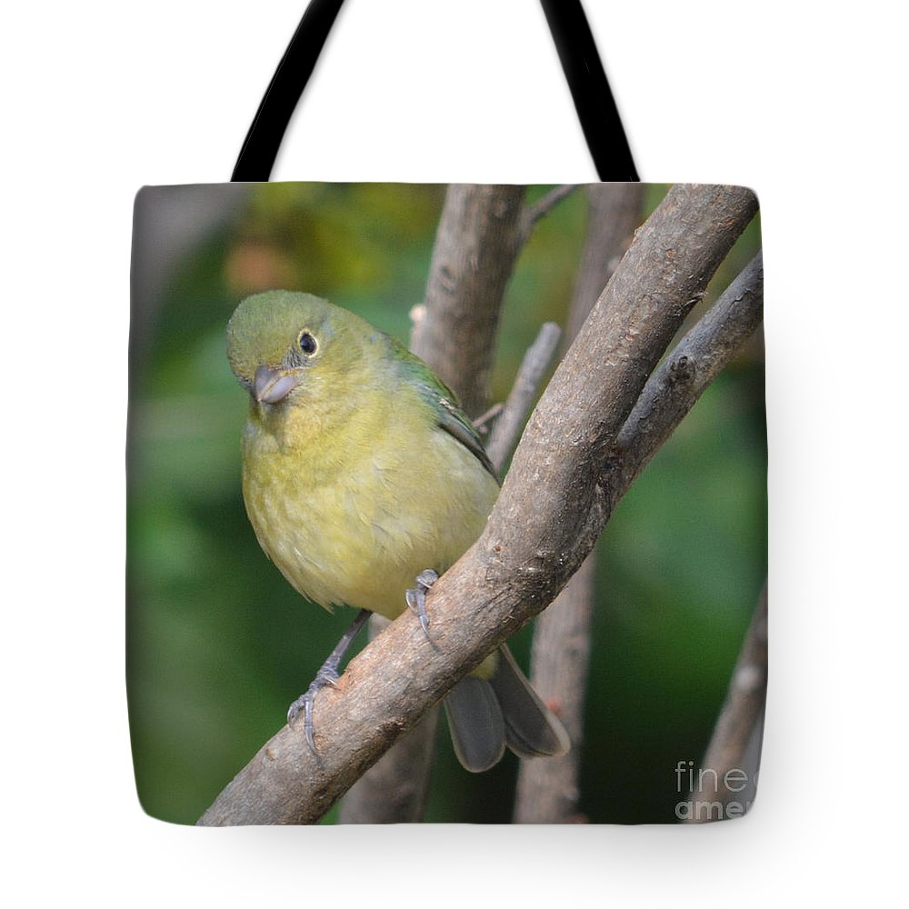 Female Bunting Prints Tote Bag featuring the photograph Female Bunting by Ruth Housley