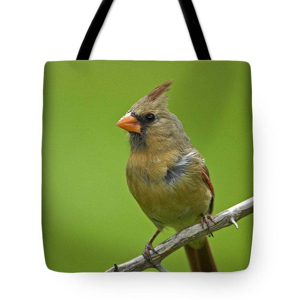 Cardinalis Tote Bag featuring the photograph Female Cardinal by Claudio Bacinello
