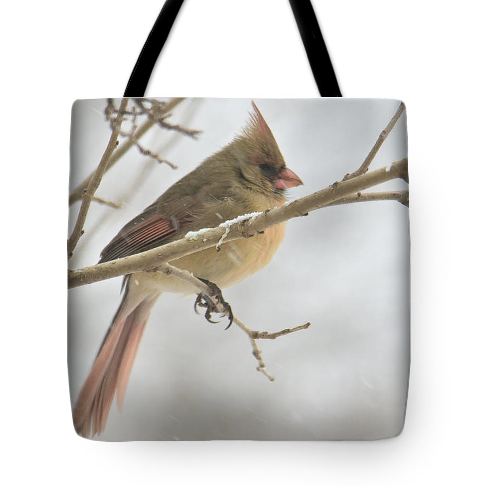 Cardinal Tote Bag featuring the photograph Female Cardinal In Snow 02 by Shelly Gunderson