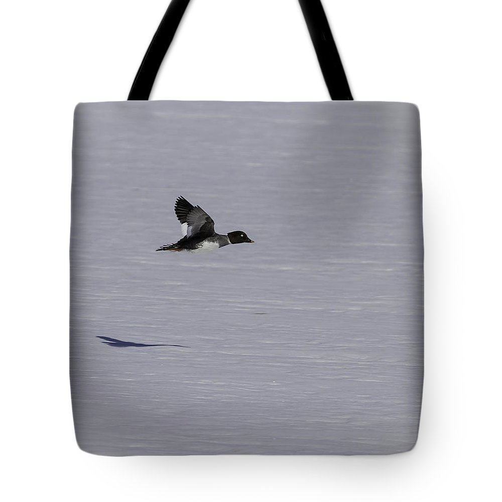 Female Goldeneye Duck Tote Bag featuring the photograph Female Goldeneye In Flight by Thomas Young