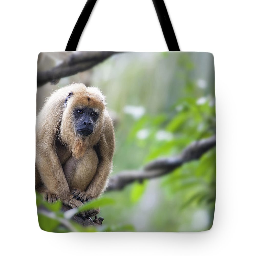 Howler Tote Bag featuring the photograph Female Howler Monkey by Jit Lim