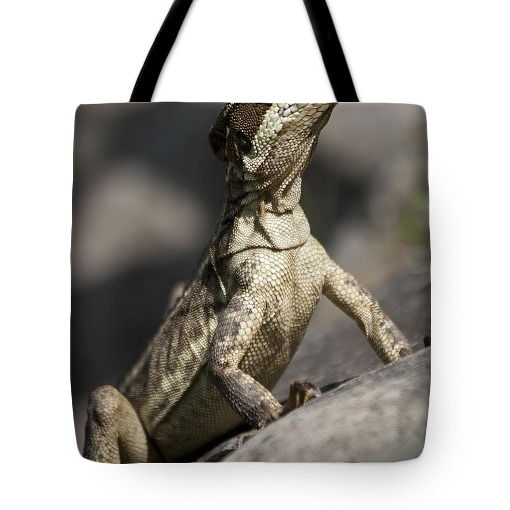 Heiko Tote Bag featuring the photograph Female Jesus Lizard by Heiko Koehrer-Wagner