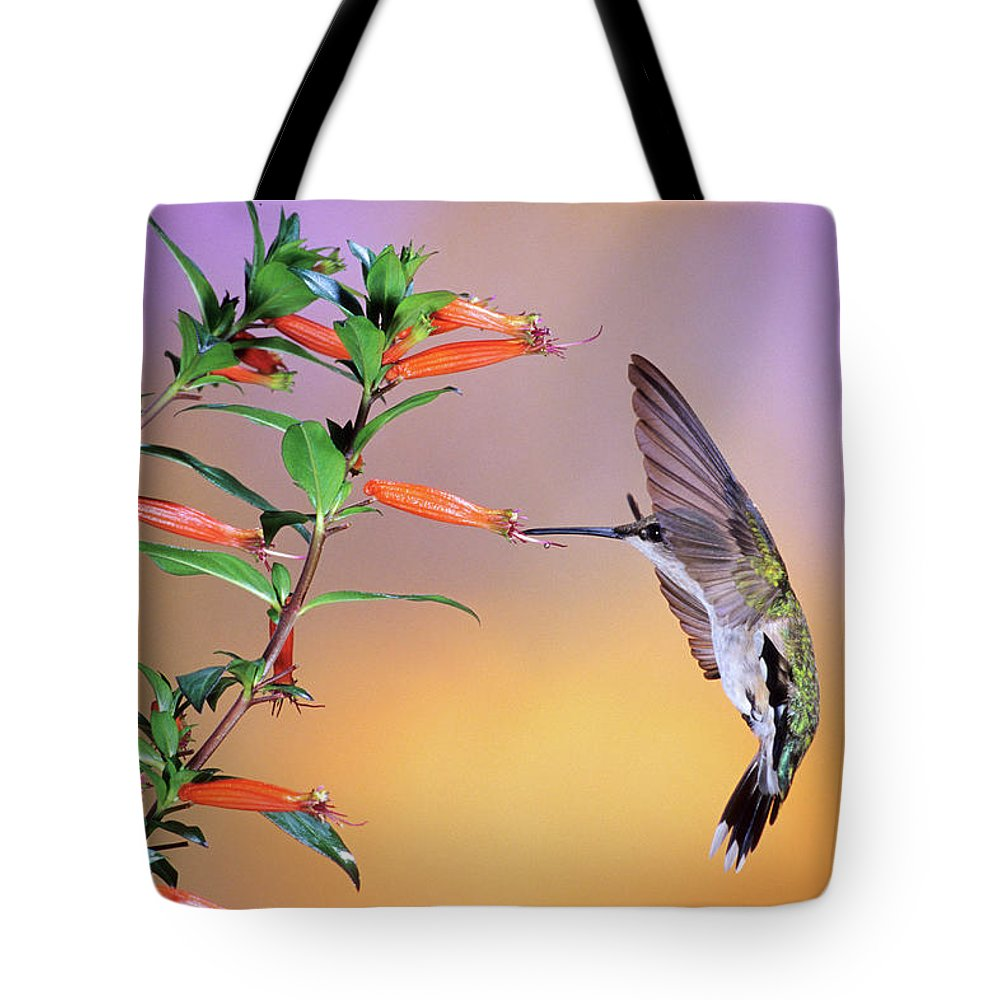 Photography Tote Bag featuring the photograph Female Ruby-throated Hummingbird by Animal Images