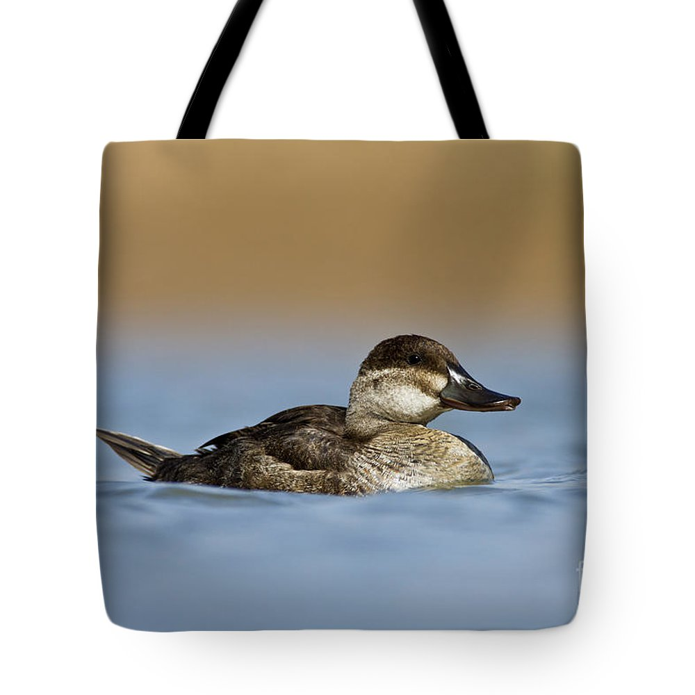 Ruddy Duck Tote Bag featuring the photograph Female Ruddy Duck by Bryan Keil