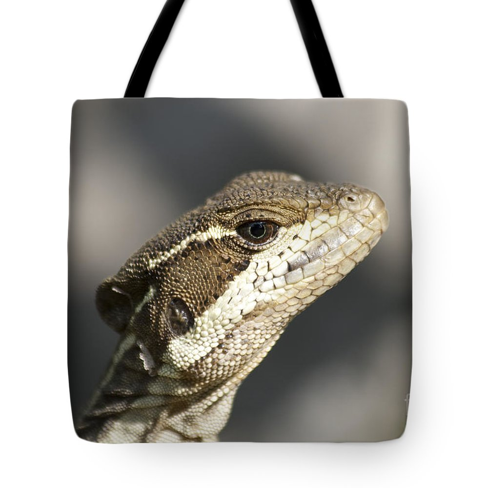 Heiko Tote Bag featuring the photograph Female Striped Basilisk by Heiko Koehrer-Wagner