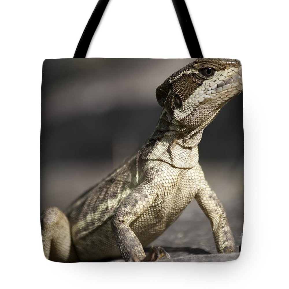 Heiko Tote Bag featuring the photograph Female Striped Lizard by Heiko Koehrer-Wagner