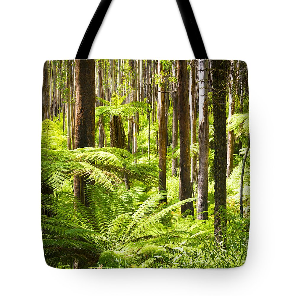 Black Tote Bag featuring the photograph Fern Forest by Tim Hester
