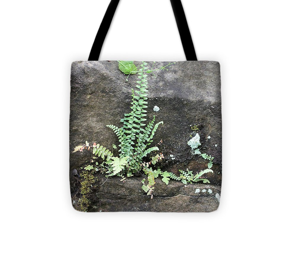 Fern Tote Bag featuring the photograph Fern On The Rocks by Dwight Cook