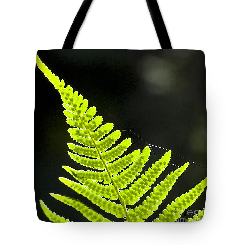 Heiko Tote Bag featuring the photograph Fern Tip by Heiko Koehrer-Wagner