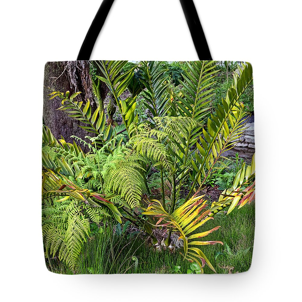 Ancient Plants Tote Bag featuring the photograph Ferns II by Kate Brown