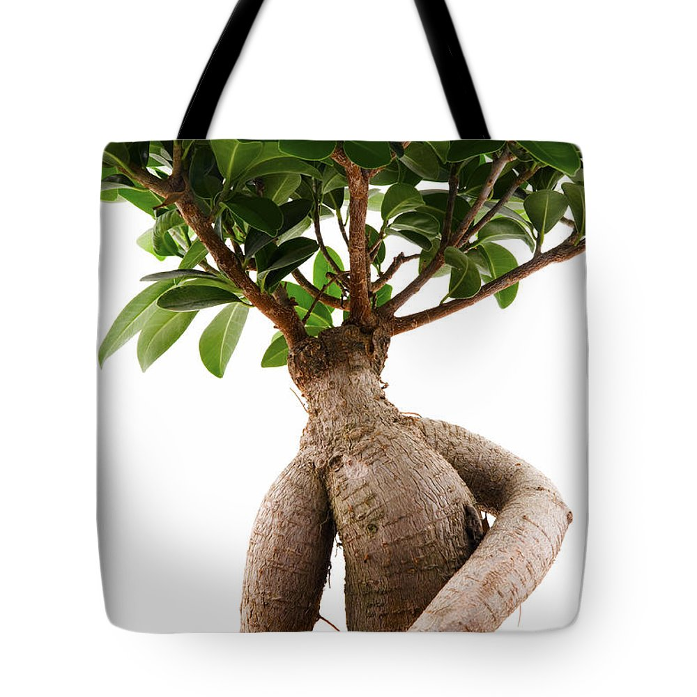 White Background Tote Bag featuring the photograph Ficus Ginseng by Fabrizio Troiani