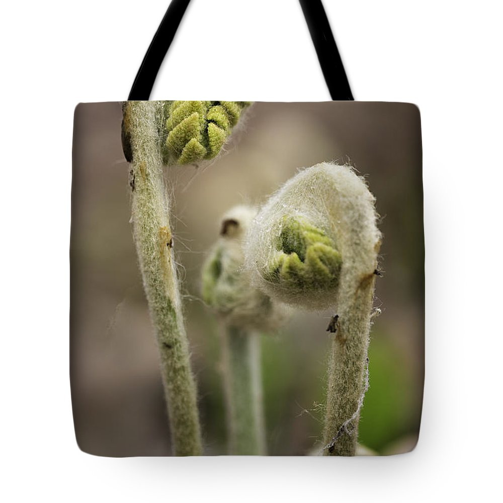 Ferns Tote Bag featuring the photograph Fiddlehead Unfurling by Fran Gallogly