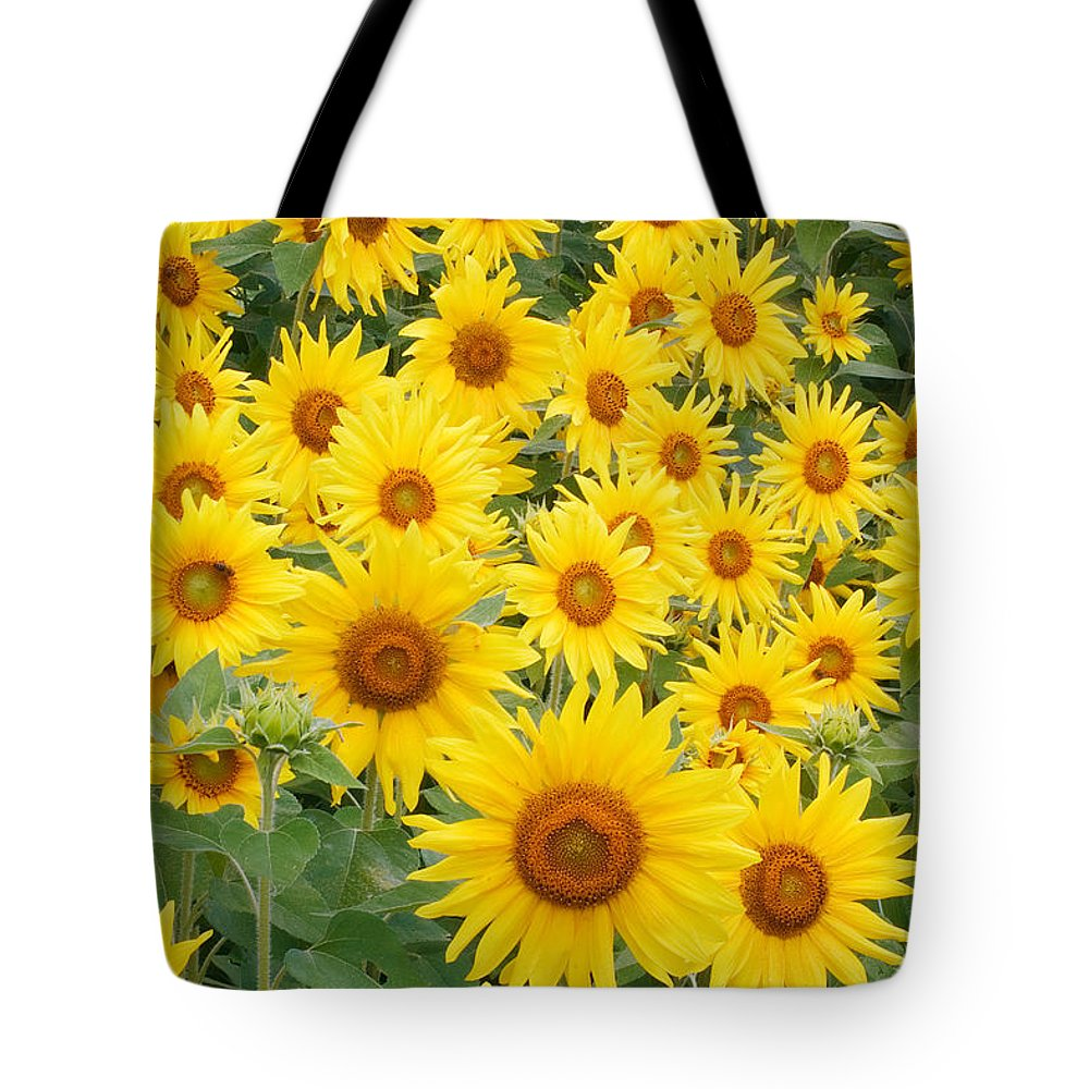 Flora Tote Bag featuring the photograph Field Of Sunflowers Helianthus Sp by David Davis