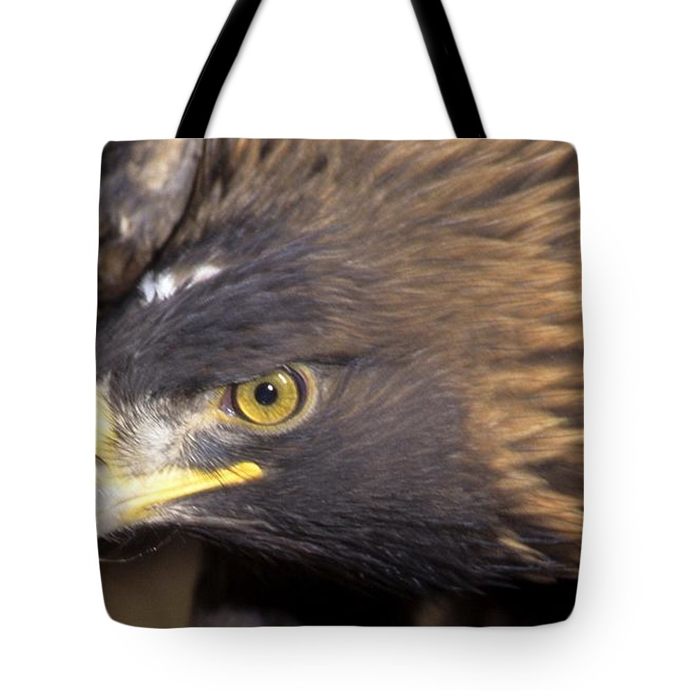 Eagle Tote Bag featuring the photograph Fierce Golden Eagle by Larry Allan