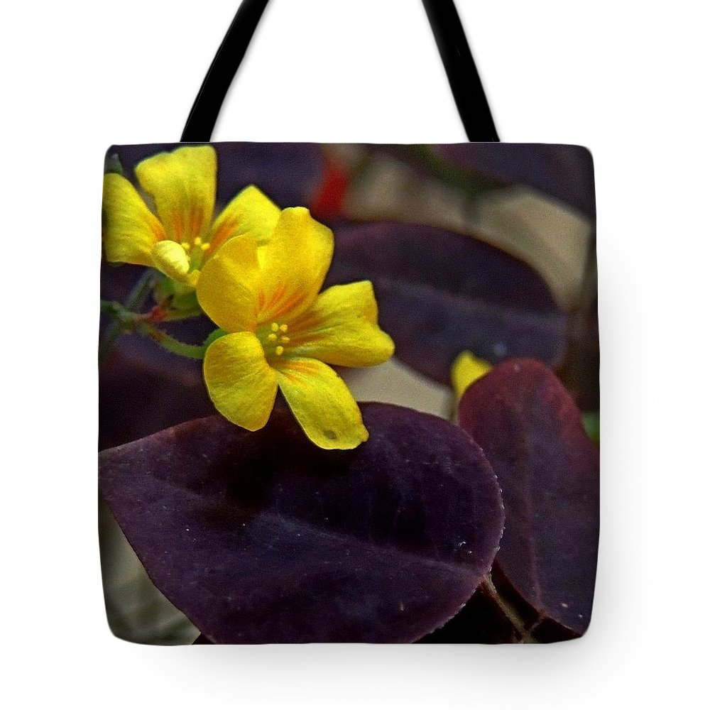 Oxalis Hedysaroides Tote Bag featuring the photograph Fire Fern by Denise Clark