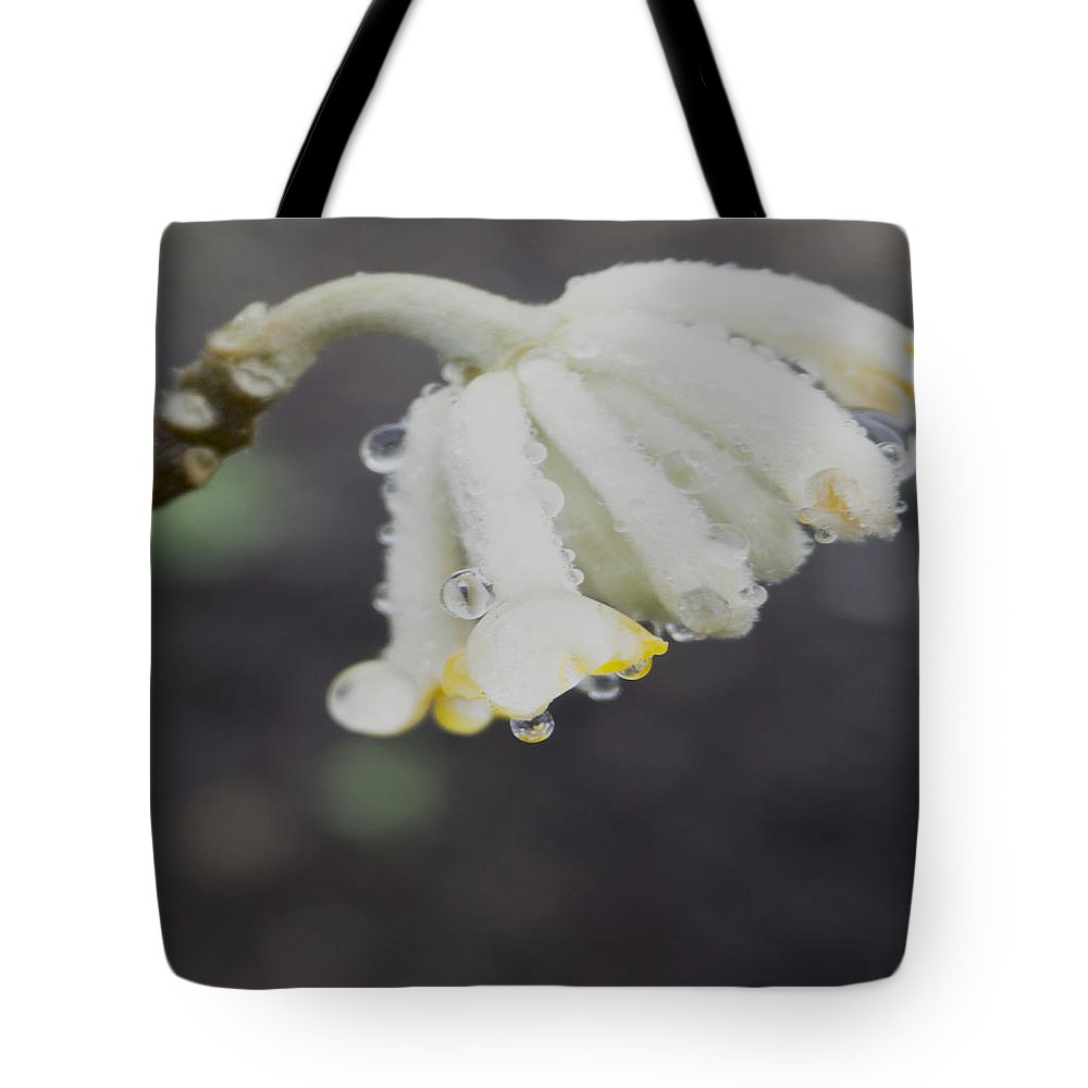 Tote Bag featuring the photograph First Blossom by Cathy Anderson