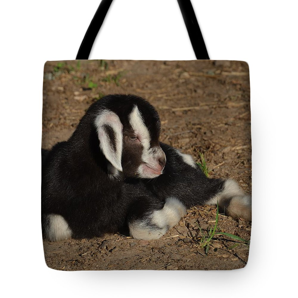 Baby Goat Tote Bag featuring the photograph First Light by Deanna Cagle