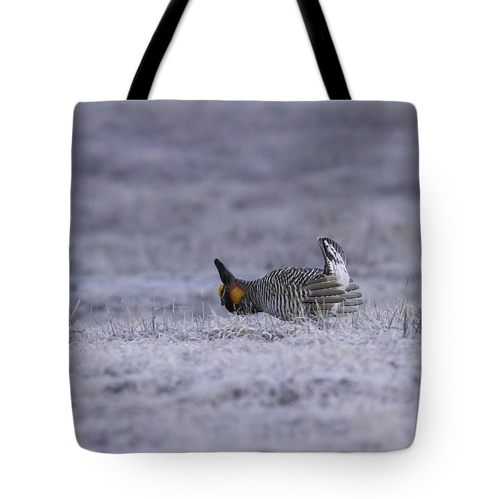 Prairie Chicken Tote Bag featuring the photograph First Light by Thomas Young