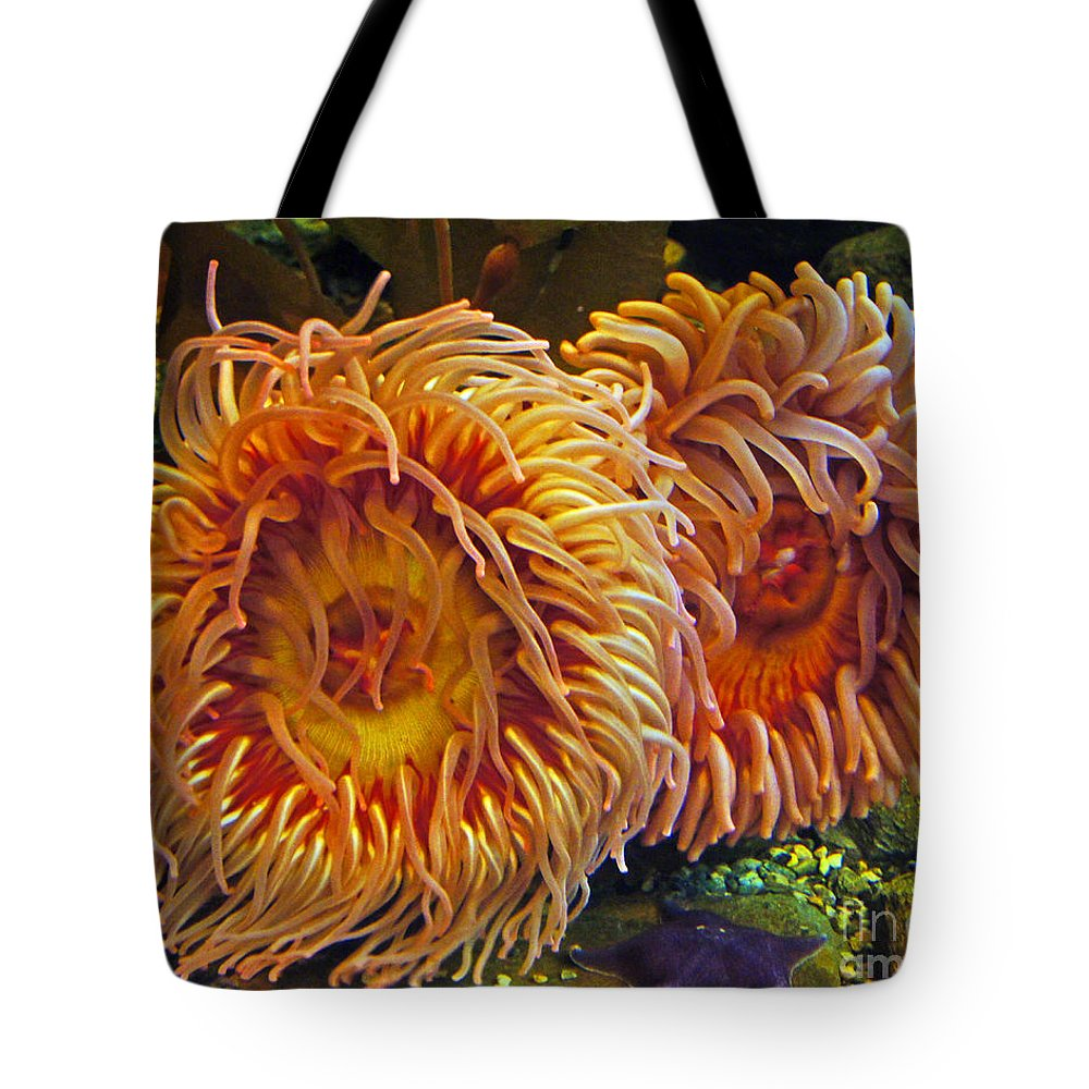 Anemone Tote Bag featuring the photograph Fish Finders by Joe Geraci