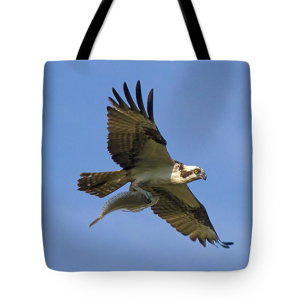 Osprey Tote Bag featuring the photograph Fish For Dinner by David Freuthal