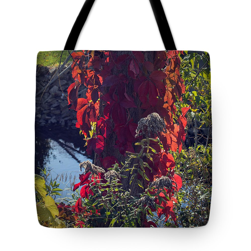 Tree Tote Bag featuring the photograph Flaming Beauty by Jayne Gohr