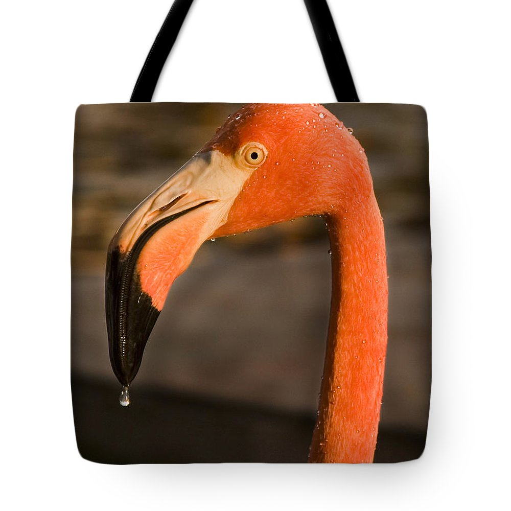 3scape Tote Bag featuring the photograph Flamingo by Adam Romanowicz