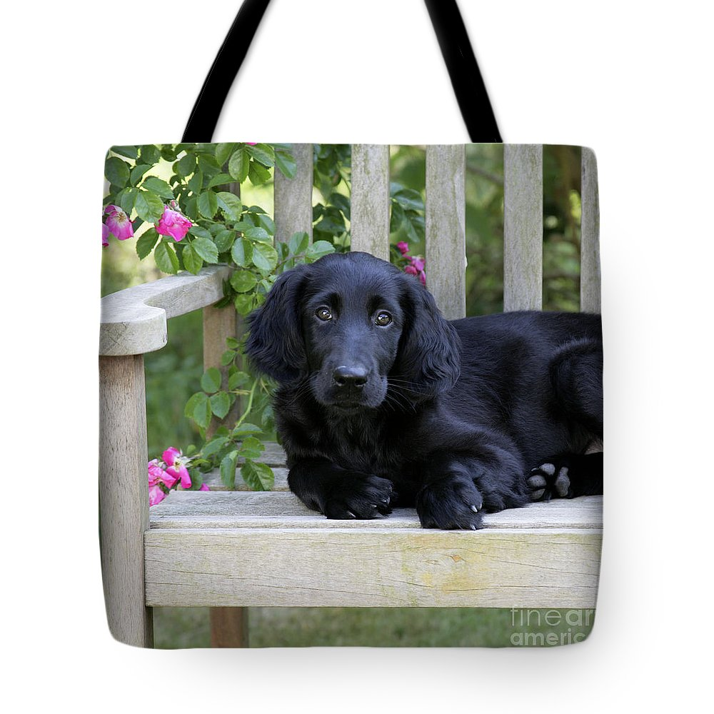Flat-coated Retriever Tote Bag featuring the photograph Flat-coated Retriever Puppy by John Daniels