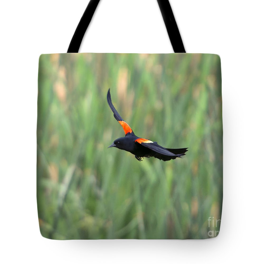 Red Winged Blackbird Tote Bags