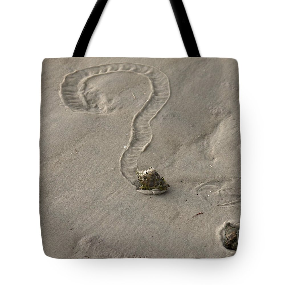 Florida Crown Conch Tote Bag featuring the photograph Florida Crown Conch Photo by Meg Rousher