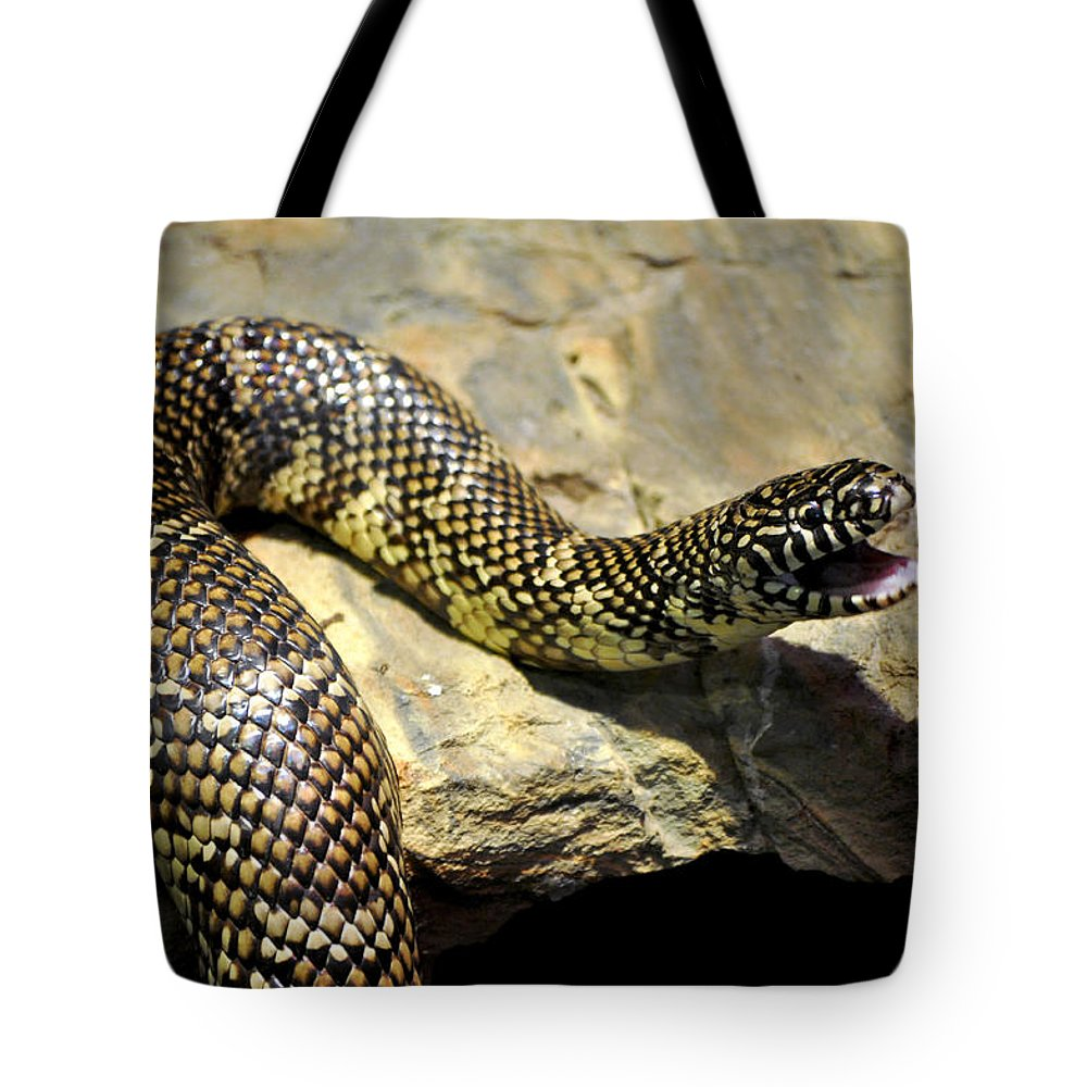 Florida King Snake Lampropeltis Getula Floridana Usa Tote Bag